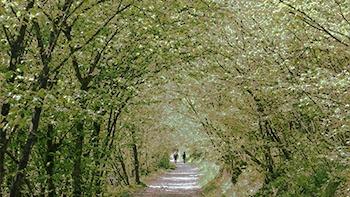 Ericksonian Hypnosis - down a garden path